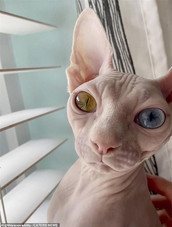 Cặp mèo với 2 màu mắt khác nhau gây bão mạng xã hội - Ảnh 3.