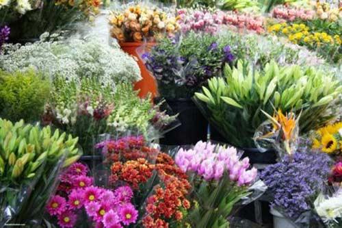 Bạn nên chọn mua hoa còn tươi nguyên để có thể để được lâu, nếu có thể, nên mua cành hoa còn nguyên gốc.