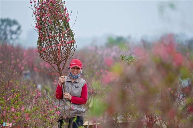 Vườn đào ngập sắc hồng, nông dân thấp thỏm lo mất Tết - 10