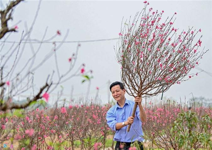 Vườn đào ngập sắc hồng, nông dân thấp thỏm lo mất Tết - 8
