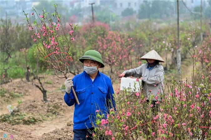 Vườn đào ngập sắc hồng, nông dân thấp thỏm lo mất Tết - 9
