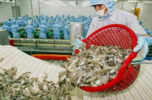 """""""Bắt mạch"""" cơ hội thị trường cho xuất khẩu tôm Việt"""