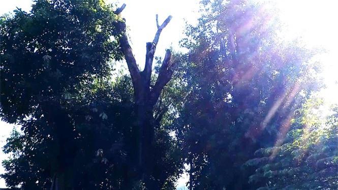cây quái thú hương thủy, thừa thiên huế - ảnh 9