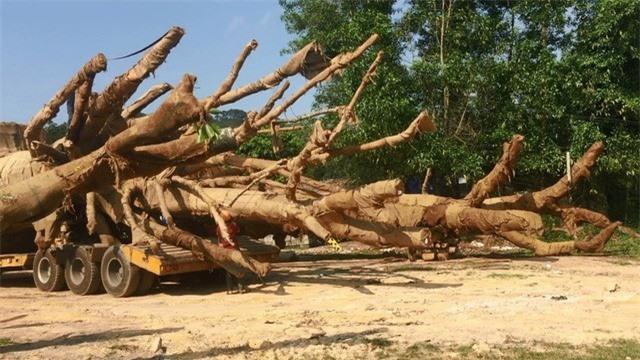 cây quái thú hương thủy, thừa thiên huế - ảnh 12