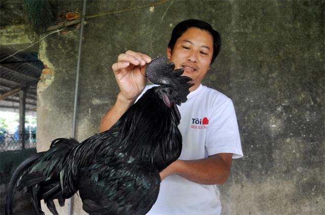 Trại gà H'Mông cháy hàng ngày cận Tết - 3