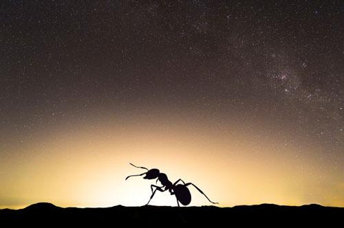 Các loài côn trùng ban đêm dễ bị ảnh hưởng bởi ánh sáng nhân tạo.