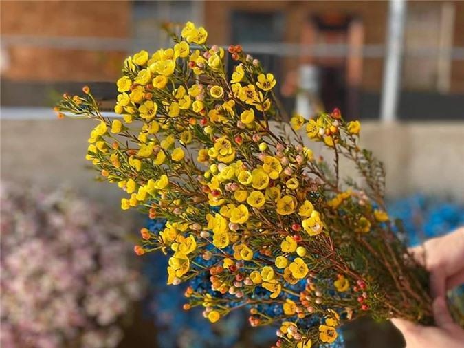 Nhung loai hoa nhap khau gay sot, chi em dua nhau mua choi Tet-Hinh-8