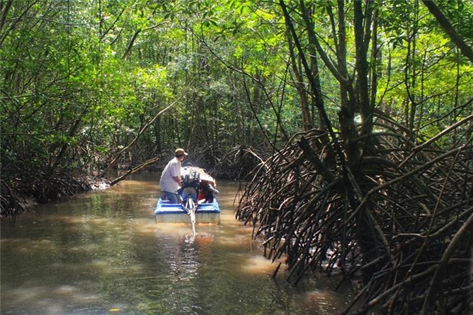 Xuyên rừng đước ngập mặn đất mũi Cà Mau