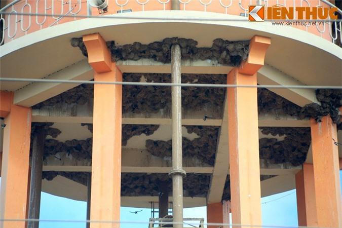 Ngam quan the to chim khong lo giua long thanh pho Viet Nam-Hinh-2