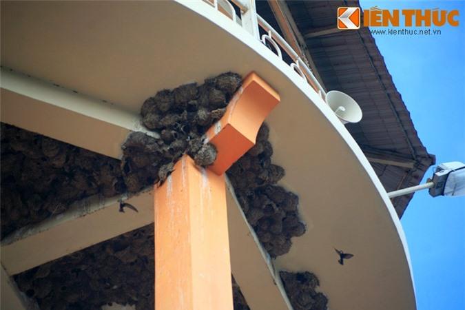 Ngam quan the to chim khong lo giua long thanh pho Viet Nam-Hinh-3