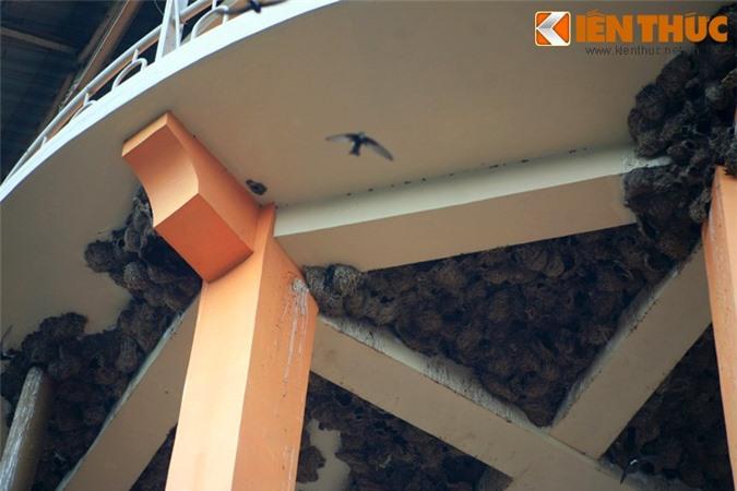 Ngam quan the to chim khong lo giua long thanh pho Viet Nam-Hinh-4