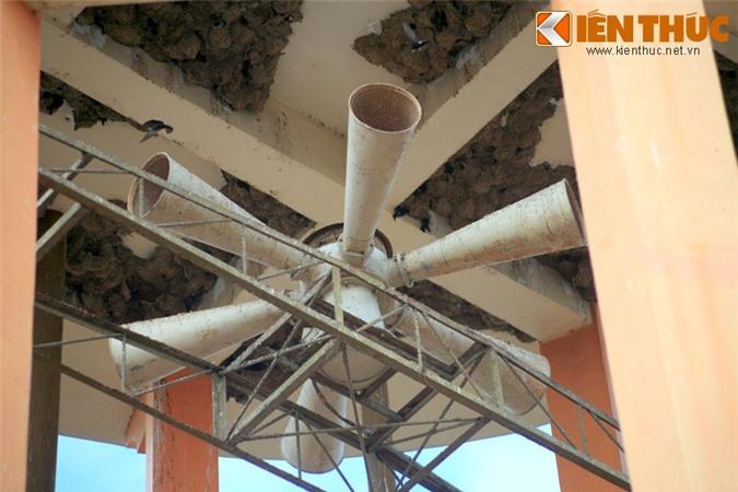 Ngam quan the to chim khong lo giua long thanh pho Viet Nam-Hinh-6