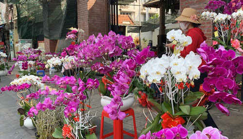 TPHCM: Tiểu thương quyết không giảm giá hoa dù cận Tết