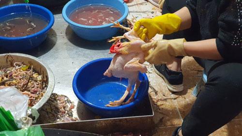 """Hải Dương: """"Hốt bạc"""" từ dịch vụ mổ gà thuê ngày Tết"""