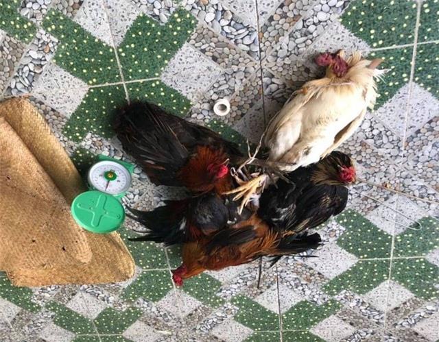 Triệt phá trường gà giữa đồng ngày mùng 4 Tết - 2