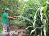 Đồng Nai: Thu hút vốn ngoại ''đổ'' vào nông nghiệp