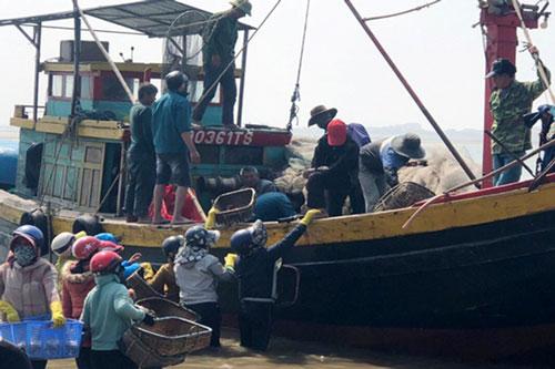 Mối buôn lội sâu ra tận tàu để mong sở hữu những mớ cá cơm tươi rói.