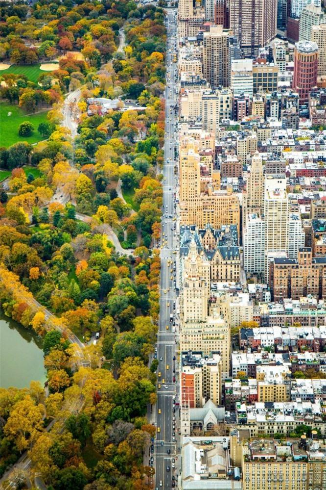 Khi rừng cây và đô thị trong cùng một khung cảnh. Không ngờ, ngẫu nhiên 2 thế giới khi đứng cạnh nhau lại đẹp đến vậy.
