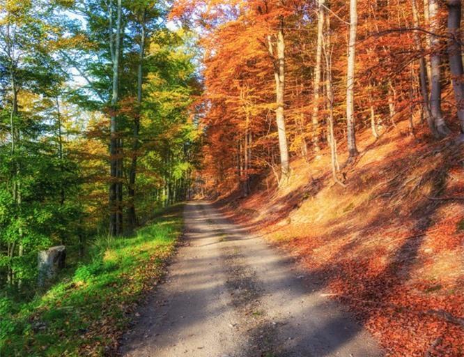 Mùa thu đã sang rồi đó, nhưng cớ sao chỉ thay đổi cảnh sắc một nửa khu rừng mà thôi?