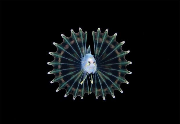 Loạt ảnh đầy ấn tượng về cuộc sống đa màu sắc và cũng không kém phần diệu kỳ phía dưới đại dương sâu thẳm - Ảnh 8.