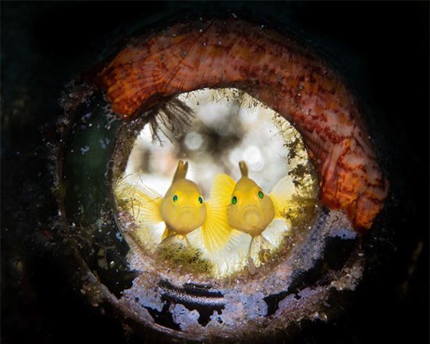 Loạt ảnh đầy ấn tượng về cuộc sống đa màu sắc và cũng không kém phần diệu kỳ phía dưới đại dương sâu thẳm - Ảnh 9.