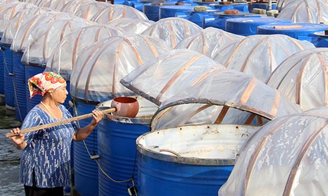 Tại Hà Tĩnh, nước mắm được sản xuất theo phương pháp truyền thống với nguyên liệu là cá cơm vẫn được nhiều khách hàng tin dùng