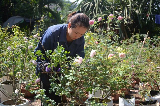 Vườn hồng ngoại với hơn 2000 gốc của nữ nhân viên y tế