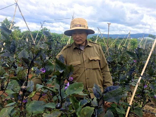 Anh Phan Xuân Hùng (thôn Đoàn Kết) chăm sóc vườn cà tím của gia đình.