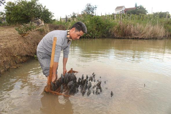 Anh Nghiêm Quang Tuấn (huyện M'Đrắk) điều chỉnh giàn cố định nuôi dưỡng trai vừa cấy nhân trong ao.