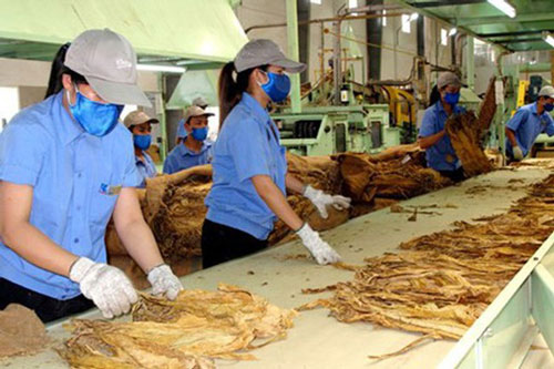 Nhập khẩu thuốc lá nguyên liệu theo hạn ngạch thuế quan cam kết tại Hiệp định CPTPP.