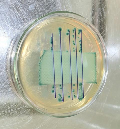 Vải kháng khuẩn đem lại nhiều mẫu thời trang có lợi cho sức khỏe người sử dụng.