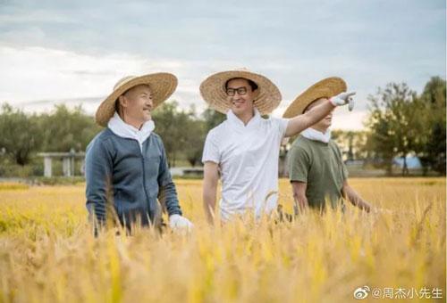 Châu Kiệt trên ruộng lúa của anh (Ảnh: J.Stars)