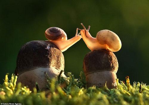 Hai chú ốc sên thân mật
