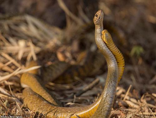 Ngôn ngữ yêu thương của loài rắn