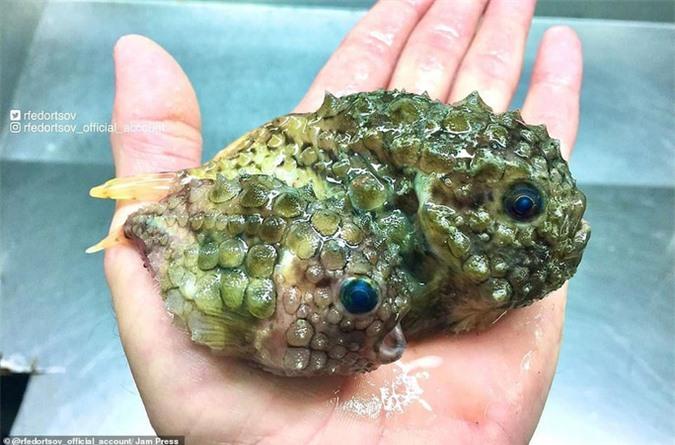 Bộ sưu tập sinh vật dưới đáy biển mới nhìn đã sợ - Ảnh 17.