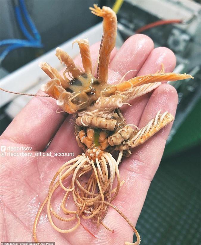 Bộ sưu tập sinh vật dưới đáy biển mới nhìn đã sợ - Ảnh 3.