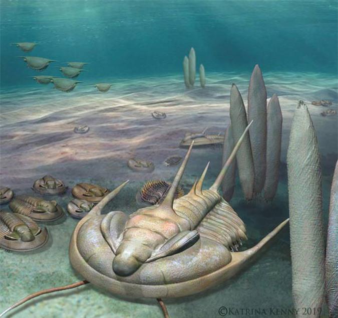 Quái vật bạo chúa 500 triệu năm xuất hiện nguyên vẹn tại Úc - Ảnh 1.