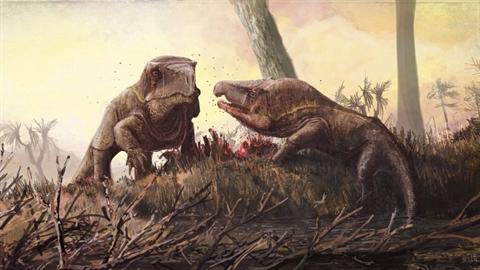 Loài động vật này có chiếc đầu lớn kì lạ, vẻ ngoài trông giống loài rồng Komodo..