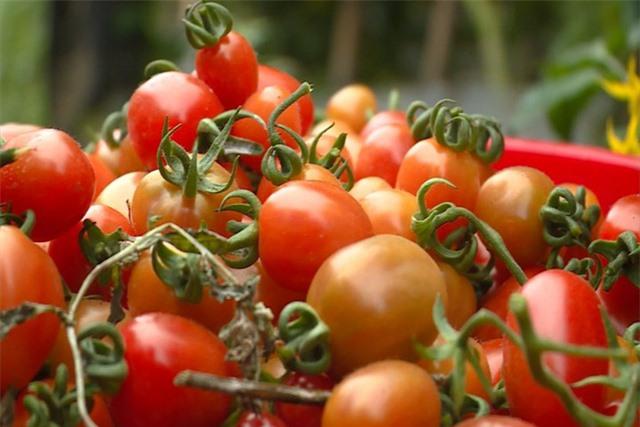 Xuất khẩu rau quả giảm mạnh do tác động của COVID-19 - Ảnh 2.