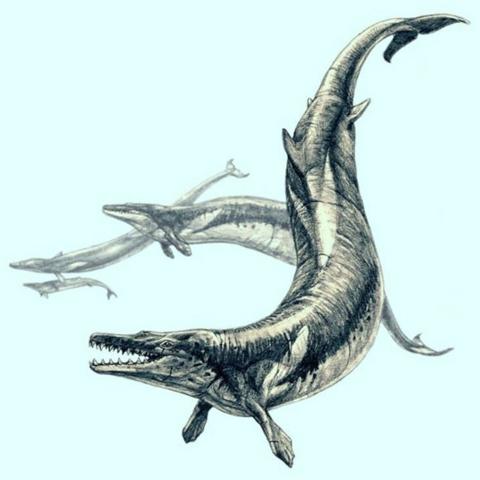 Cận cảnh loài cá voi có thân hình khác lạ, hàm răng đáng sợ mới được phát hiện