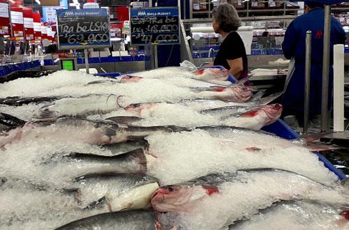 Ngành hàng cá tra chờ cơ hội phục hồi