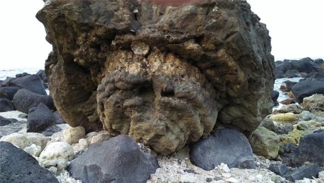 Khối san hô có hình một cây nấm