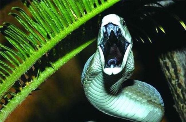 1001 thắc mắc: Vì sao rắn lại lột xác? - ảnh 1