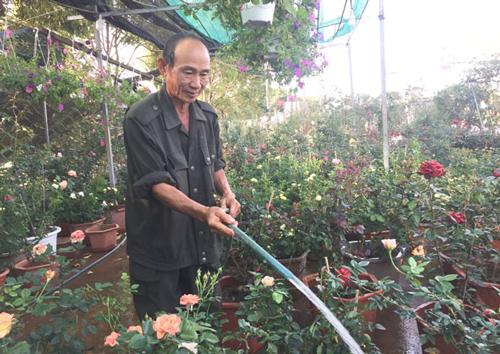 Đắk Lắk: Cựu chiến binh làm giàu từ đam mê trồng hoa