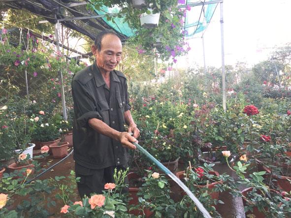 Ông Tá chăm sóc vườn hồng của gia đình.