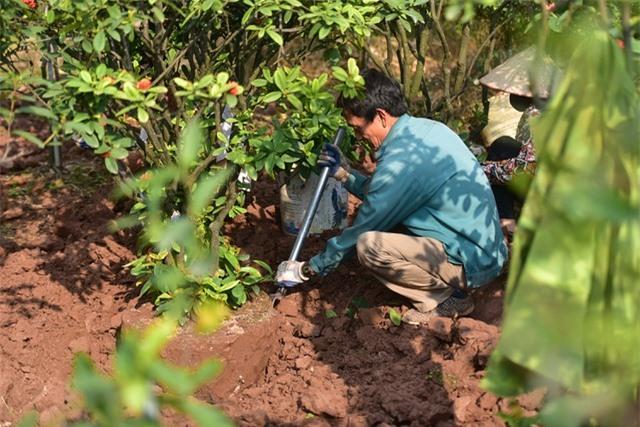 Chiêm ngưỡng vườn mẫu đơn tiền tỷ của lão nông Hưng Yên - 6