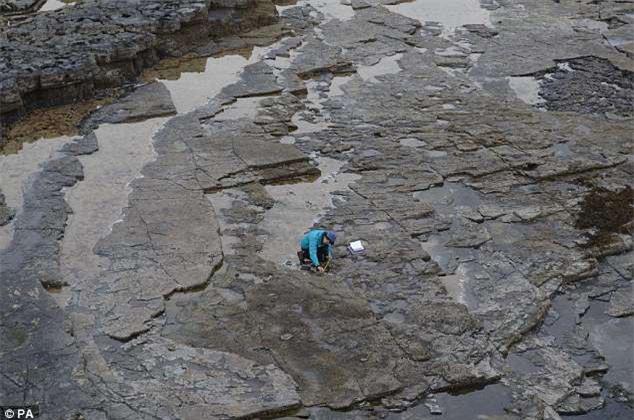Các nhà khoa học tiến hành nghiên cứu các mẫu hóa thạch