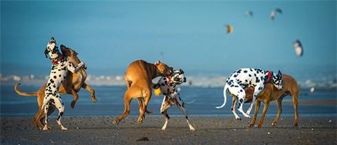 Nhiếp ảnh gia chuyên chụp... chó bay - ảnh 2