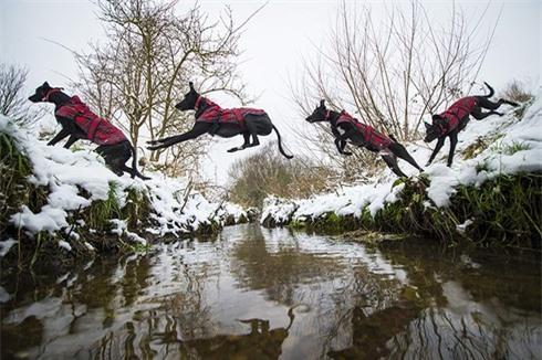 Nhiếp ảnh gia chuyên chụp... chó bay - ảnh 4