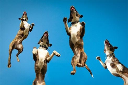Nhiếp ảnh gia chuyên chụp... chó bay - ảnh 5